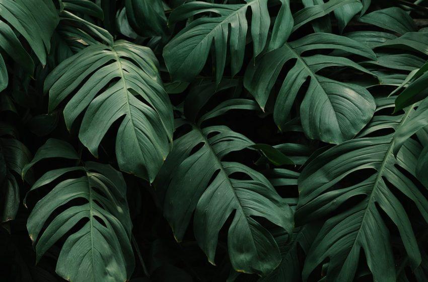La déforestation au Brésil explose, et 2020 sera bien pire