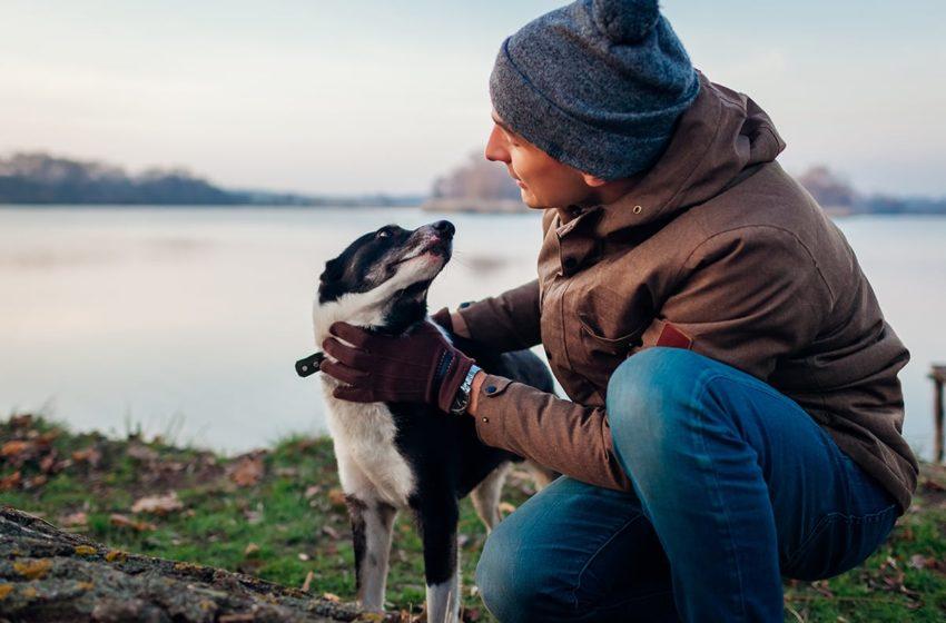 Les chiens pourraient réduire le risque de schizophrénie chez l'être humain