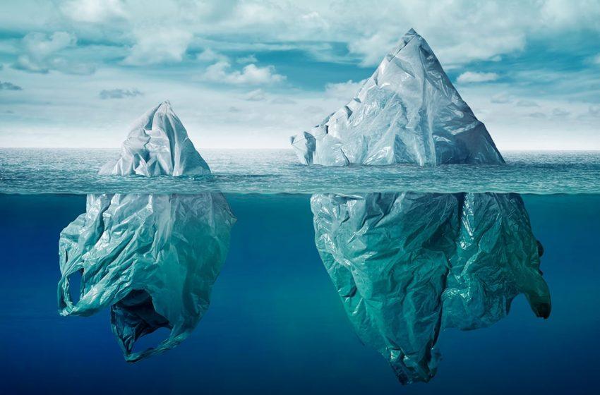 Du plastique découvert dans des crustacés vivant au plus profond de l'océan