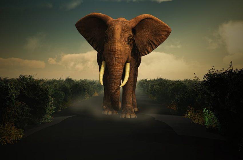 La 6ème extinction de masse est sous nos yeux