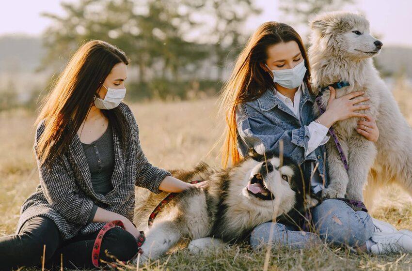 Les animaux pourraient être sensibles à l'infection à la COVID-19