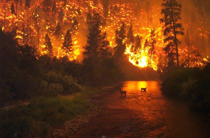 Des centaines d'espèces menacées d'extinction depuis les incendies en Australie