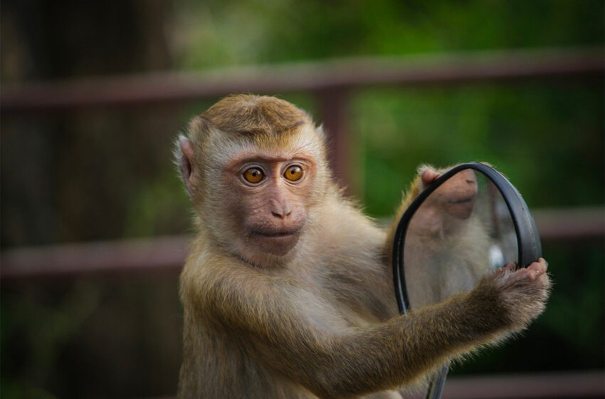 Un singe joue aux jeux vidéos par la pensée