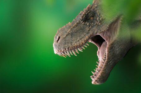 Combien existait-il de T.Rex, le plus célèbre des dinosaures ?